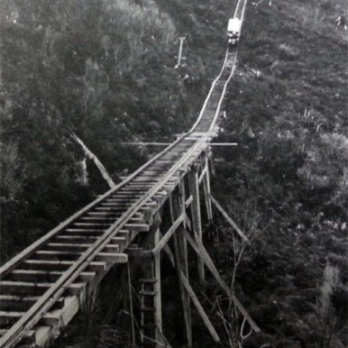 Later, Kauris were transported using small tracks