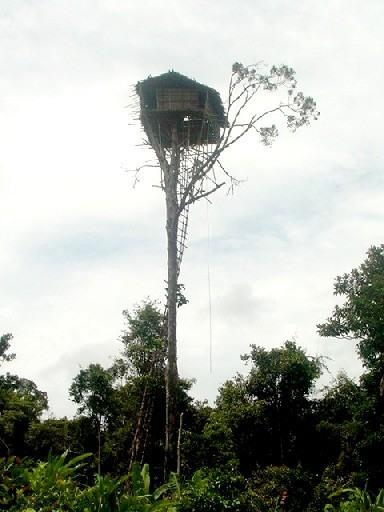 The Korowai Tribe's Incredible Tree Houses