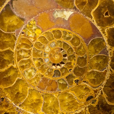 Ammonite in gemstone. Flickr Commons, User: William Warby. http://tinyurl.com/zs8a6rk