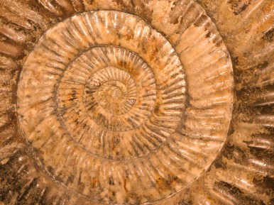 Ammonite - Flickr Commons. User: Olis Foto. http://tinyurl.com/hzmsdmt