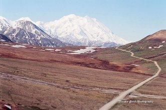Road through Denali National Park | Marsha J Black