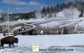 Firehole Basin at Yellowstone National Park in winter   Marsha J Black
