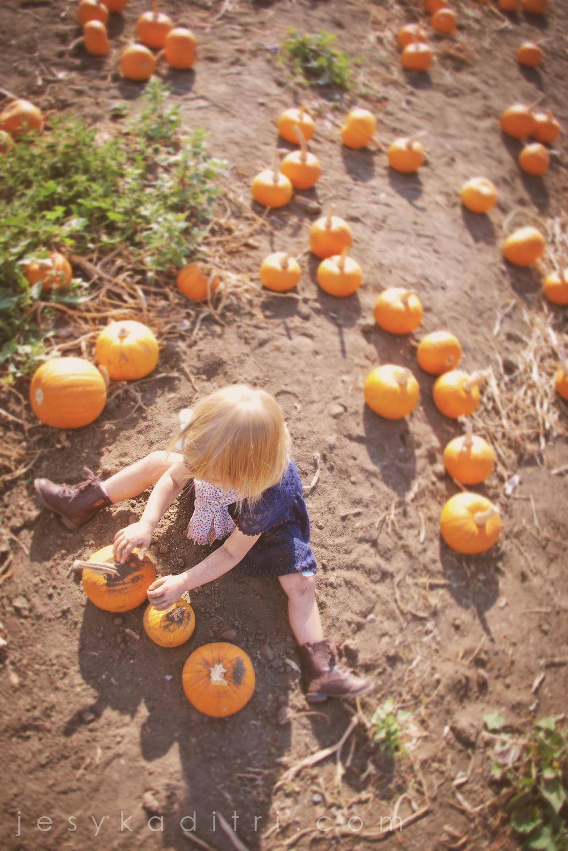 pumpkin_fieldSFW