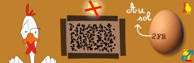 Code 2 : au sol ou en volière