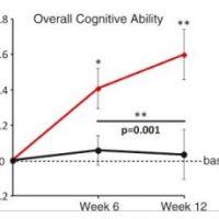 Magnesium l-threonaat goed voor denkvermogen