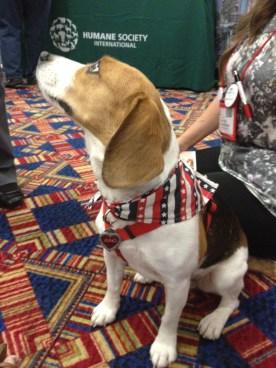 Juno looking very patriotic.