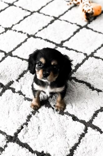 I GOT A PUPPY