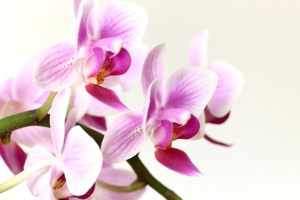 orchid-4832940_1920