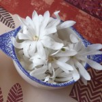 corinne fleurs 2