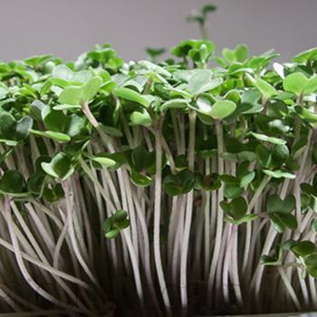 Mustard Micro Greens • Vitality Farms • Lakeland, FL • Vegetable Confetti • Micro Greens