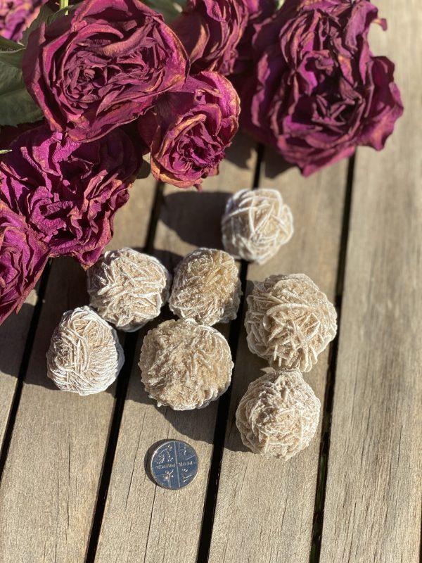 Desert Rose with 5p