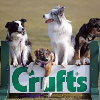 Photocall For The Launch Of Crufts 2013