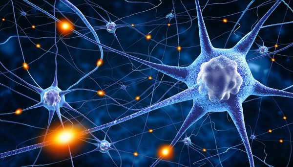 high levels of zinc in the brain can increase risk of seizures