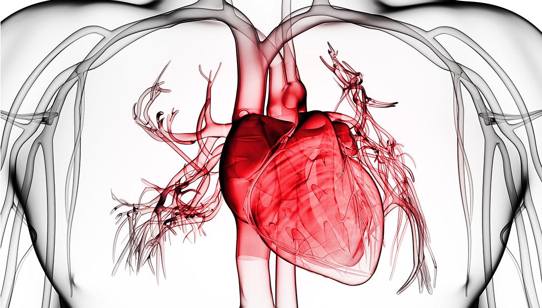 Major organs infographic