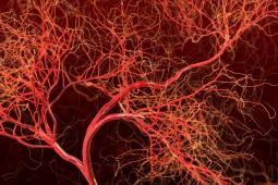illustrated view of blood vessels