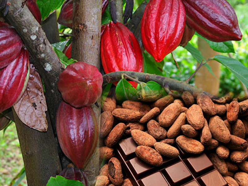 Cacao-Benefits