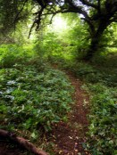 Paths - SE
