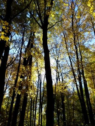 Sparse golden leaves in autumn sunlight
