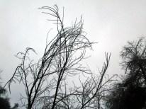 solstice park 052 wbM