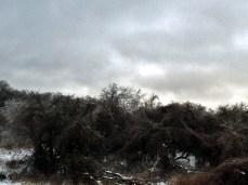 solstice park 056 wbM