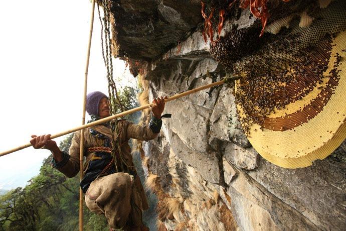 cacciatori di miele Nepal