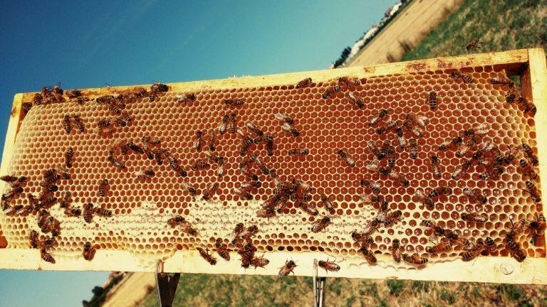 Telaino da melario con miele