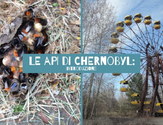 Le api di chernobyl