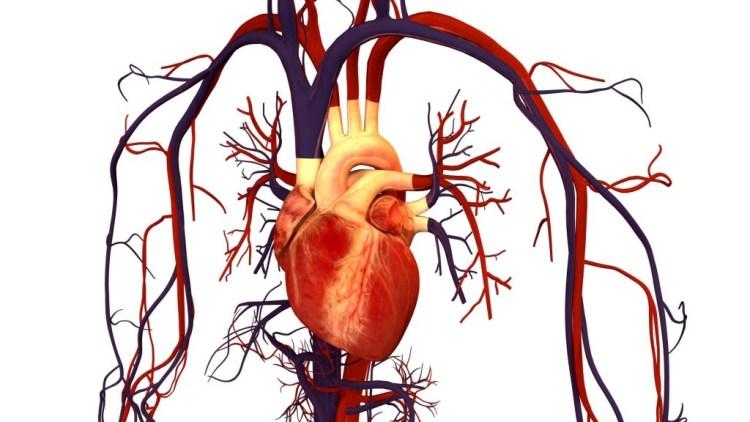 hearth b12 cardio