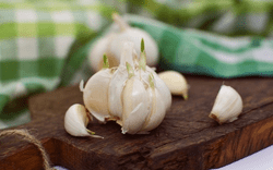 Garlic Extract Lowers the Risk of Heart Diseases