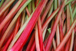 Siberian Rhubarb and Menopause Symptoms