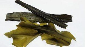 Kombu - Makanan Beralkali Untuk Pesakit Gout