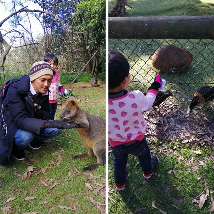 Kanggaru-dan-wombat-di-wildlife-park