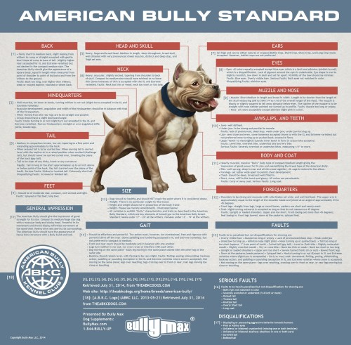 small resolution of standard american bully