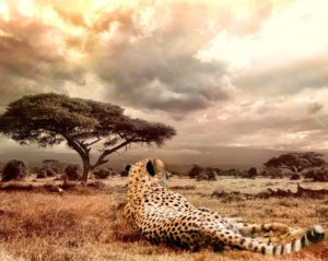 África: o continente da Esperança