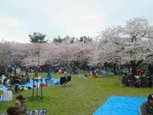 Kansai Cherry Blossoms and BBQ