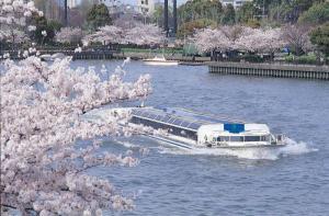 Okawa Sakura Cruise