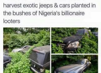 Bush Of Cars