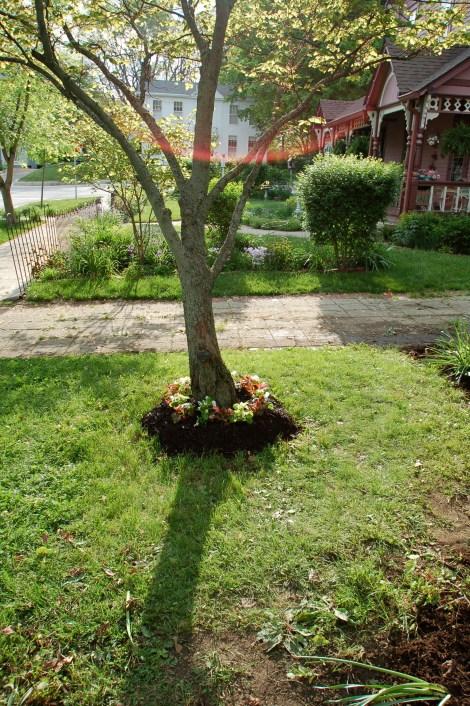 Garden for Blog37