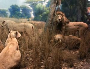 April Trip to New York City. Mammal Exhibit. Vivacious Views