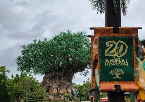 Memorial Day at Disney World. Animal Kingdom. Vivacious Views