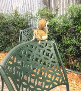 Smokehouse. Squirrel. Disney Springs. Vivacious Views