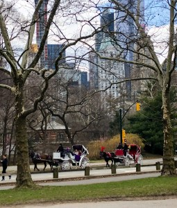 Central Park Faves. Carriage Ride(1). Vivacious Views