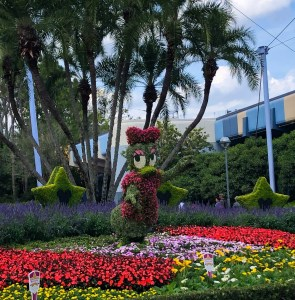 2019 Epcot Flower and Garden Festival. Daisy. Vivacious Views