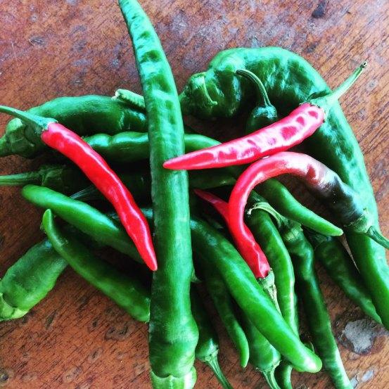 Hot Peppers at Hacienda Okra