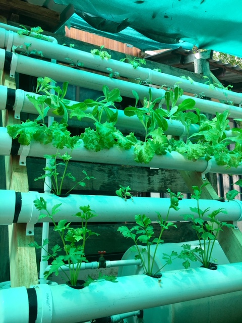 Hydroponic Garden Today