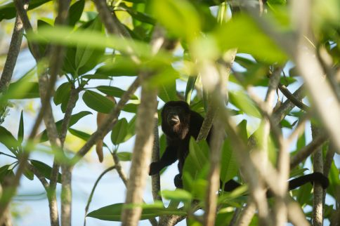 Wilds of Costa Rica