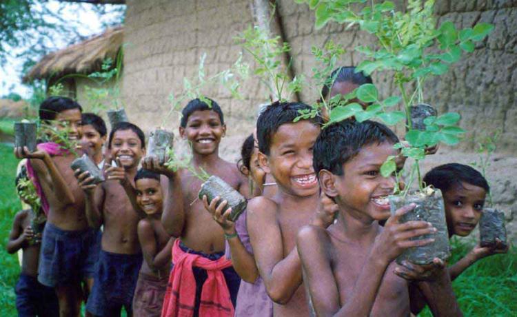 Moringa, a planta que purifica a água e poderia acabar com a fome mundial