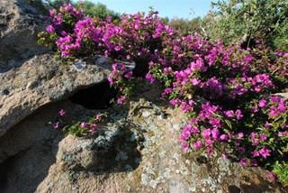 servizi Il giardino di San Teodoro vivaio piante