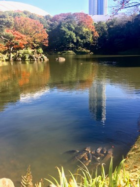 top places to see fall leaves in tokyo