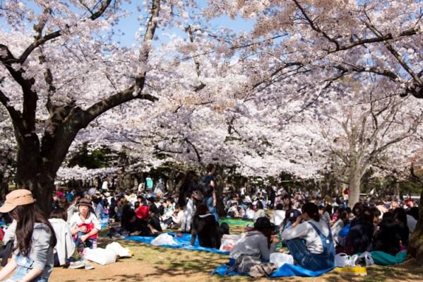 hanami spots in tokyo
